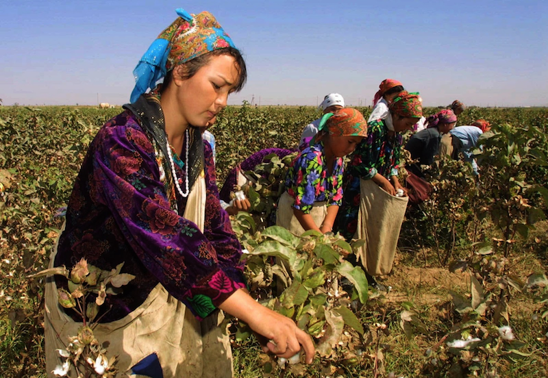 Modern day slavery in Uzbekistan's cotton sector